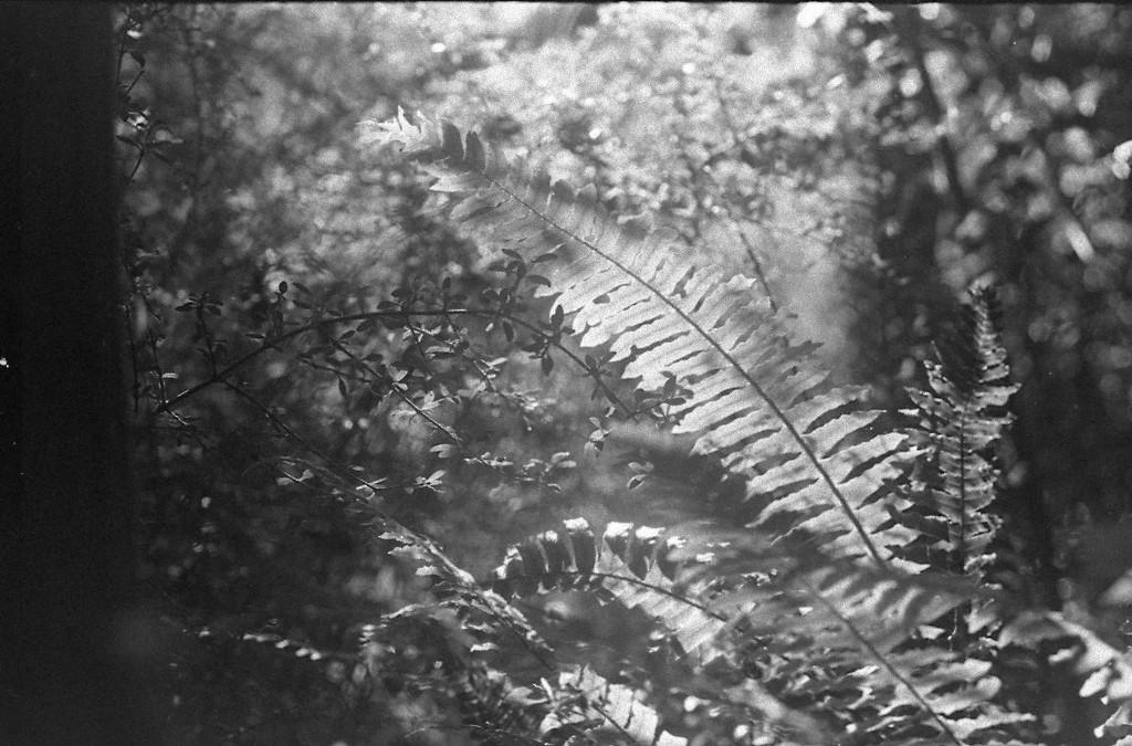 bush scene by kali66
