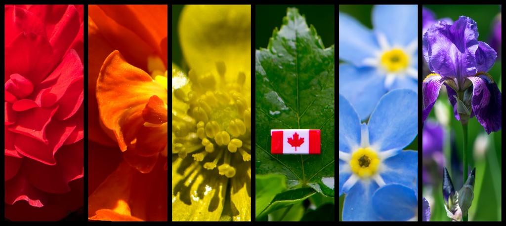 Rainbow flowers by novab