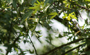 2nd Aug 2019 - Tree and leaves