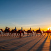Camels at Cable Beach by yorkshirekiwi