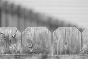 2nd Aug 2019 - Just a fence