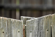 2nd Aug 2019 - My fence