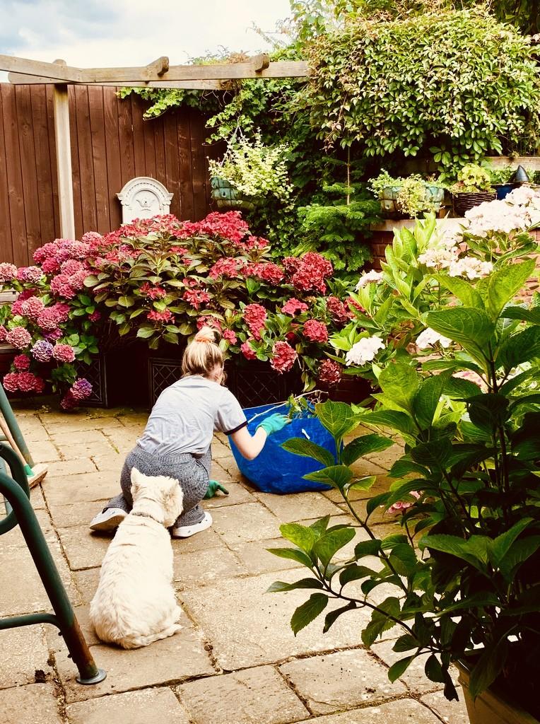 The gardener by pamknowler