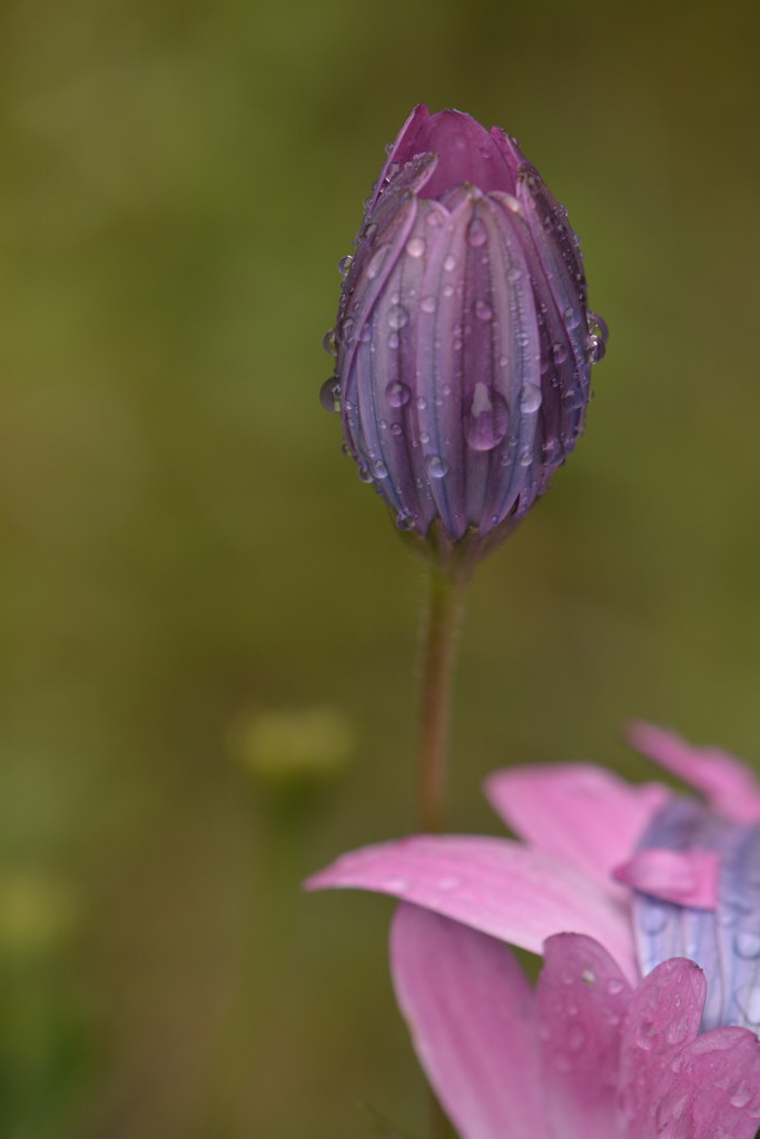 .....more raindrops...... by ziggy77