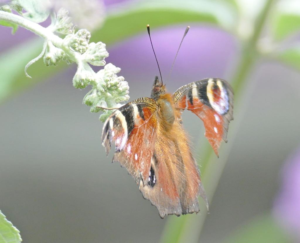 Poor butterfly by jesika2