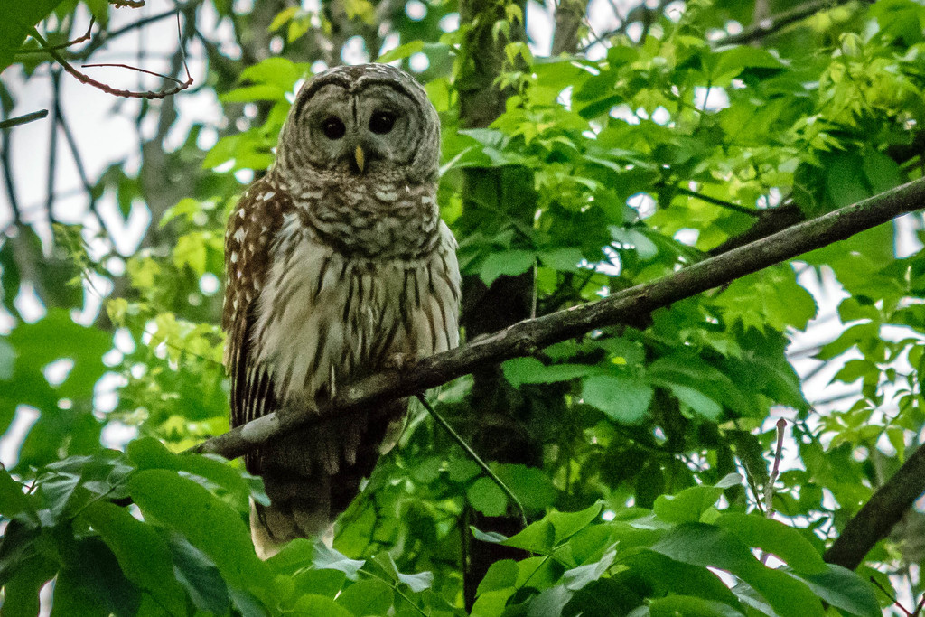 18 May 2019 Owls, Lake and flowers-7 by marylandgirl58