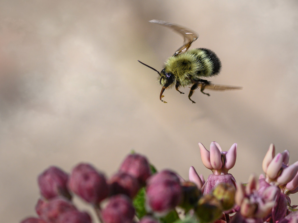 Flying Bee by taffy
