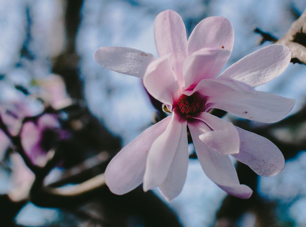 Pink by brigette