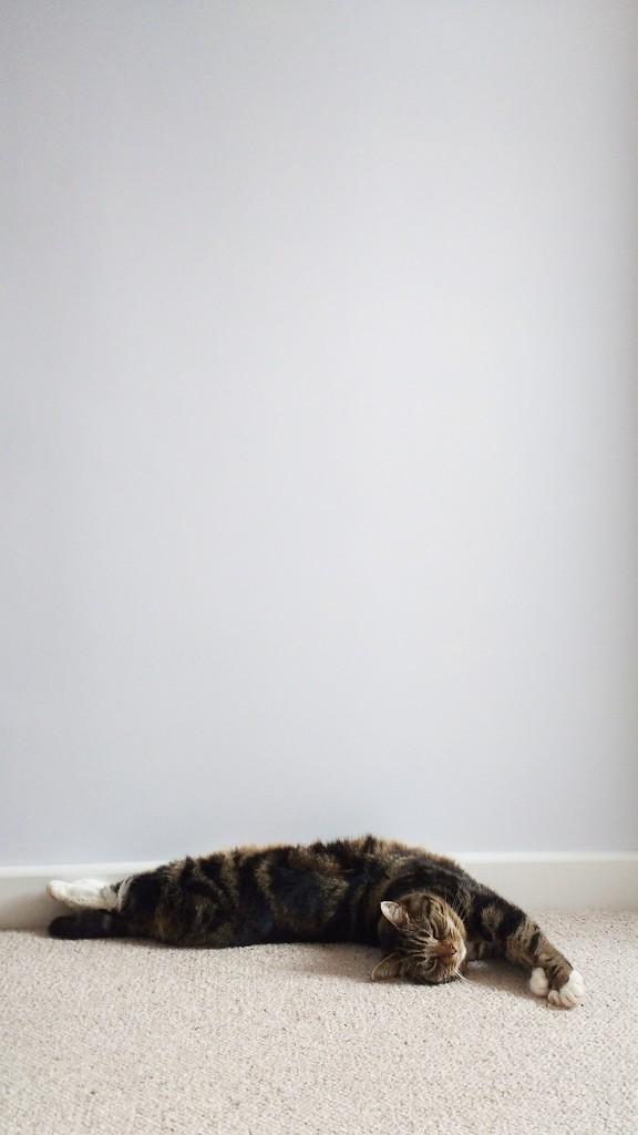 Dozy Cat by 30pics4jackiesdiamond