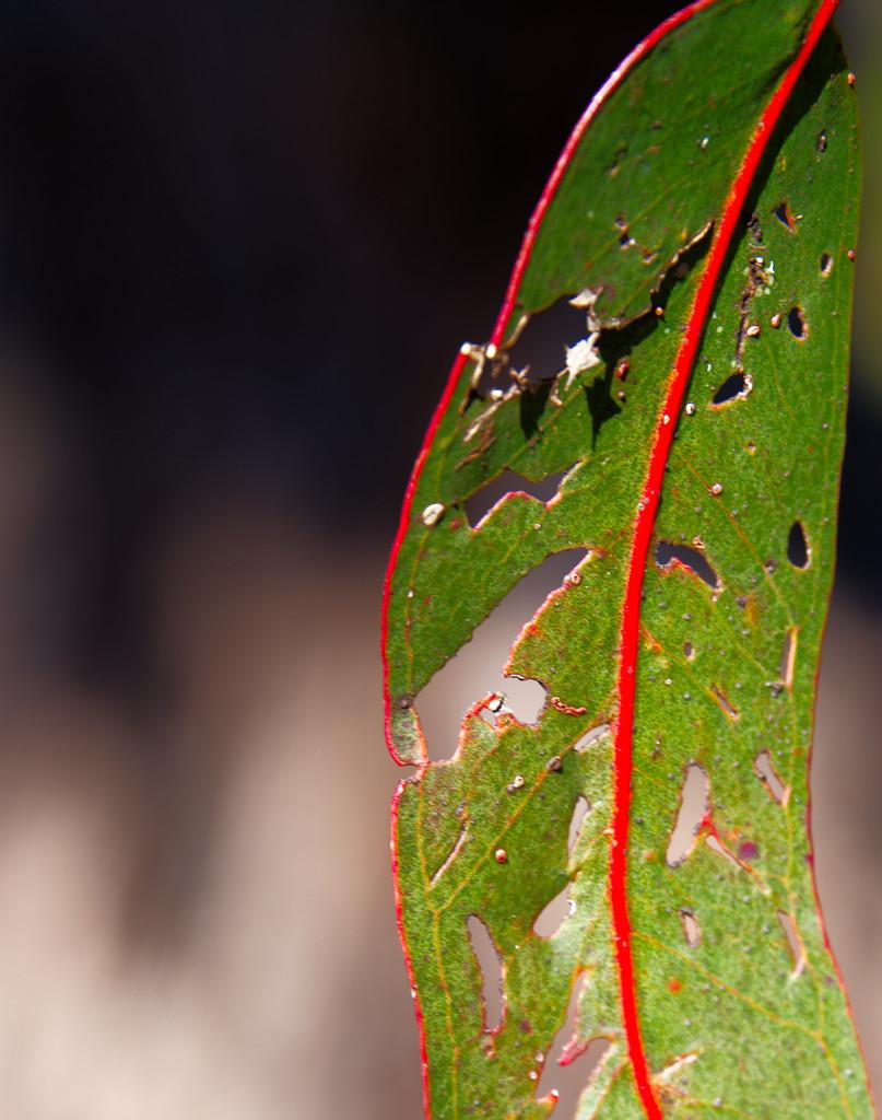 leaf forms by fr1da