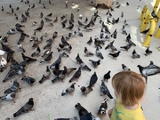 5th Aug 2019 - Boy Vs Pigeons