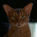 Those Abyssinian eyes! by berelaxed