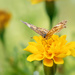 moth by jernst1779