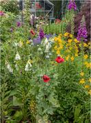 5th Aug 2019 - Garden Colour