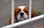 7th Aug 2019 - Visiting dog