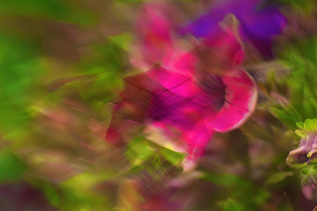 Abstract flower...... by ziggy77