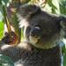 Frankie by koalagardens