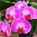 The Graceful & Elegant Orchid by gardenfolk