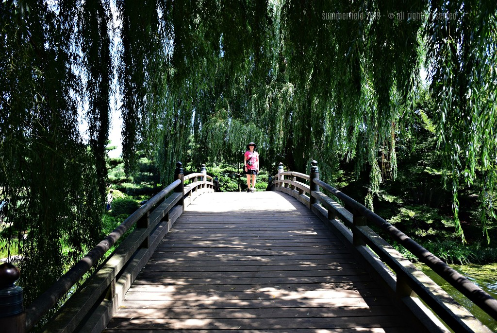 at the japanese garden by summerfield