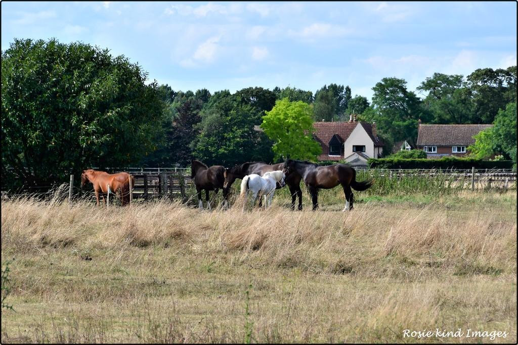A lovely rural scene by rosiekind