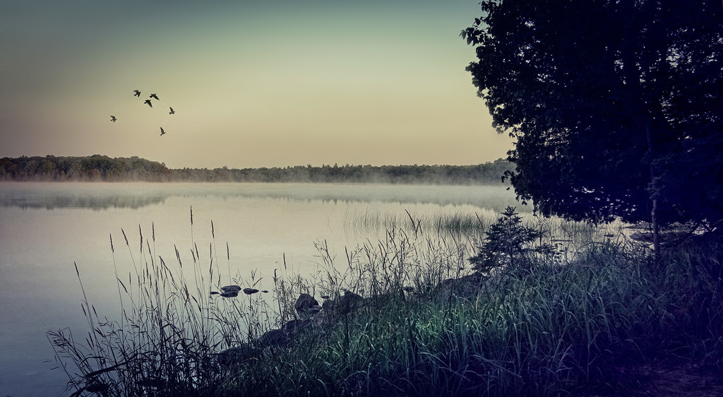 Foggy Morning ... by pdulis