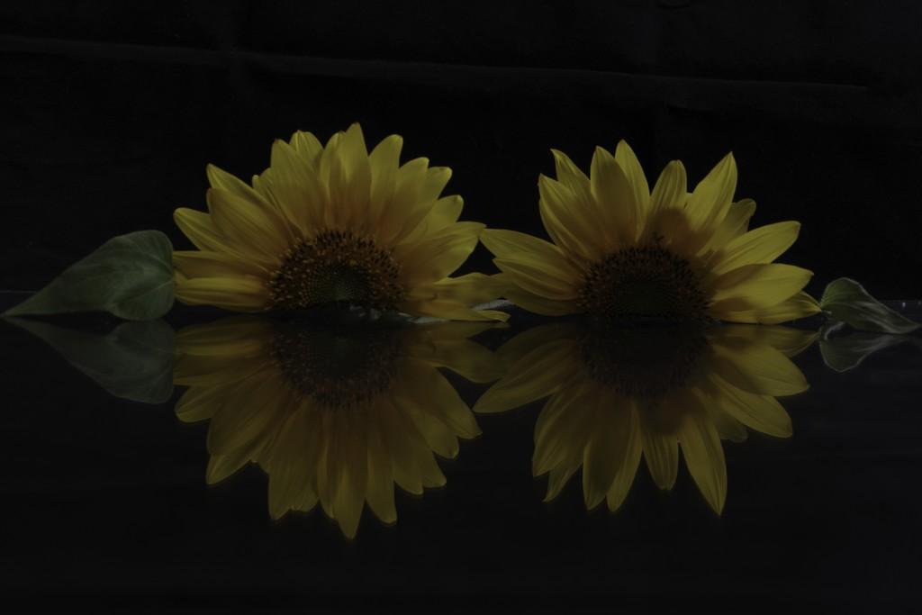 Symmetry (a la Mona?) by 30pics4jackiesdiamond