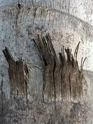 8th Aug 2019 - Palm tree art