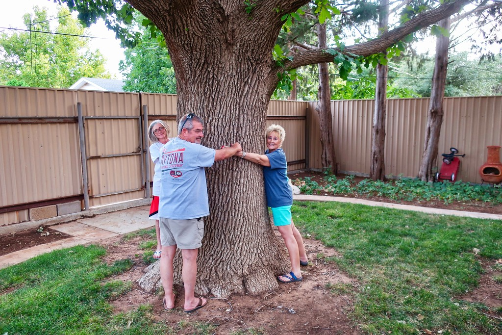 Patty's oak tree by louannwarren
