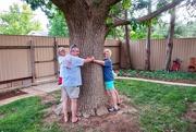 8th Aug 2019 - Patty's oak tree