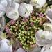 Hydrangeas by pamknowler
