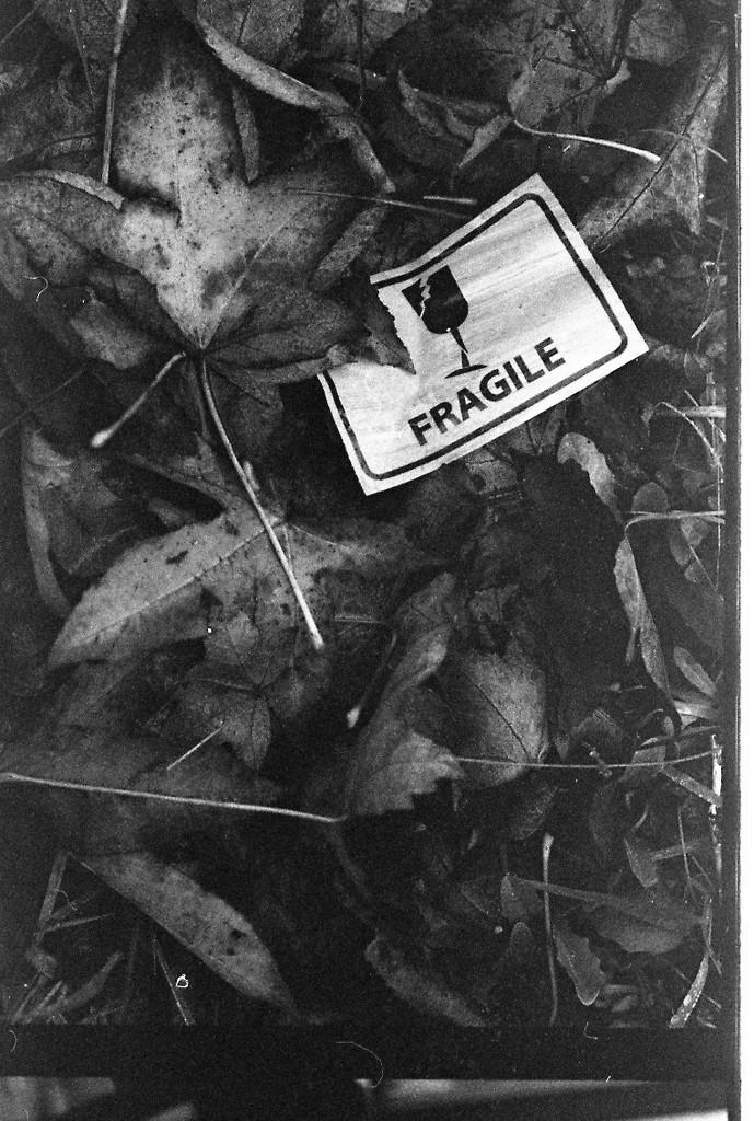 fragile by kali66