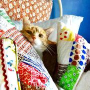 8th Aug 2019 - Happy International Cat Day 🐈