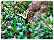 9th Aug 2019 - Pollinators in the Park