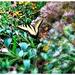 Pollinators in the Park