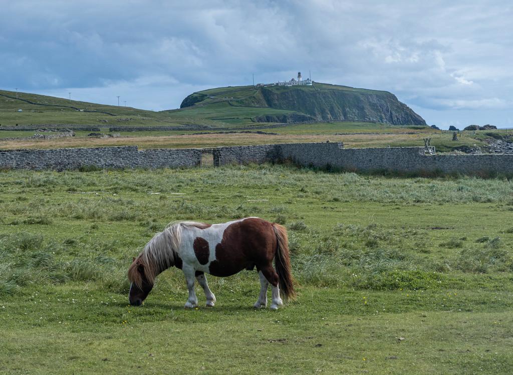 Two Shetland Icons by ellida