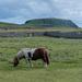 Two Shetland Icons