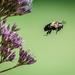 On Bee-ing by marylandgirl58
