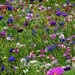 Wild flowers in Rottach Egern by ludwigsdiana