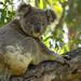 natures little helper by koalagardens