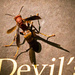 Devil's Wasp!