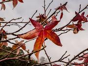 4th Aug 2019 - Forgotten leaves