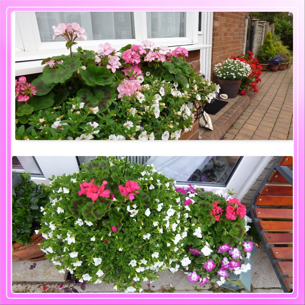 Windowbox and pots  by beryl