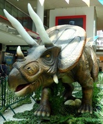 11th Aug 2019 - Triceratops