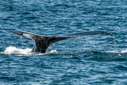 10th Aug 2019 - Whale Tail