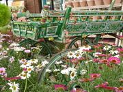 10th Aug 2019 - gypsy wagons display