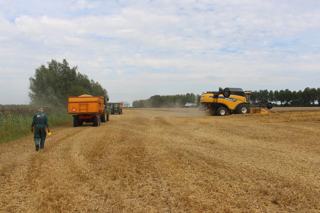 Harvest team works by pyrrhula