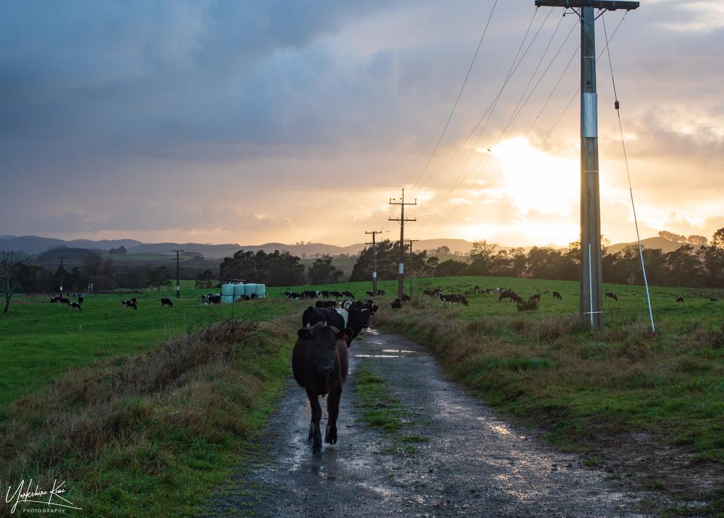 Morning Walk by yorkshirekiwi