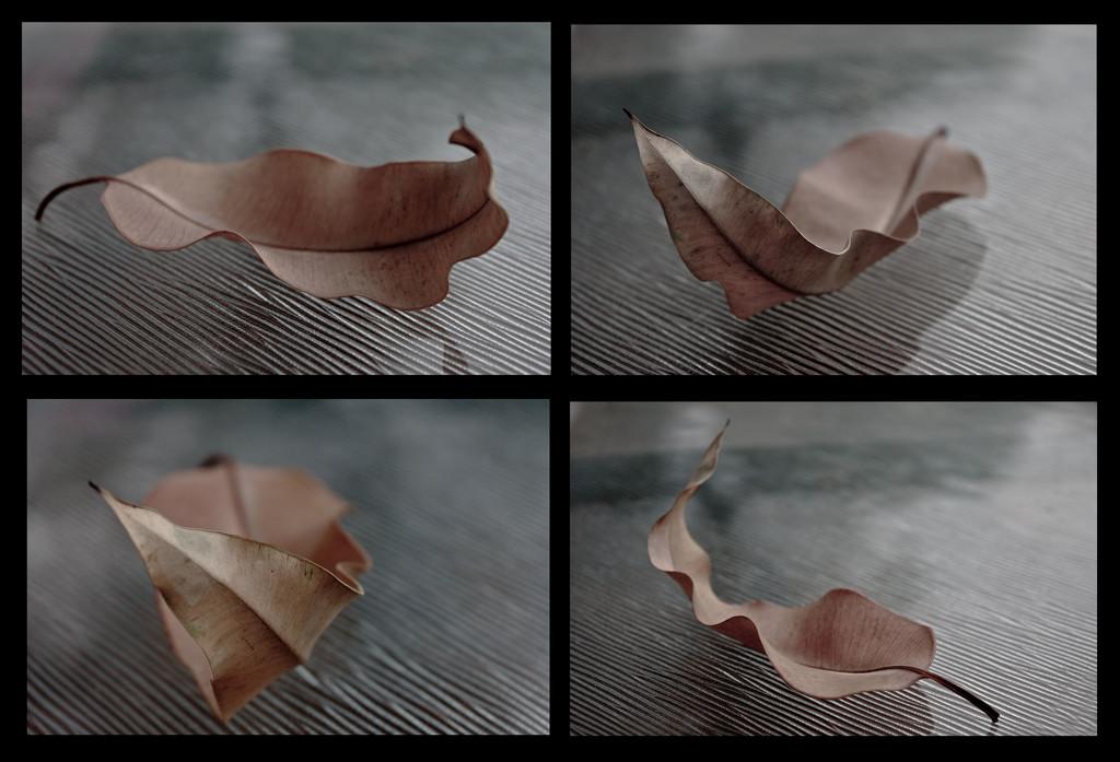 leaf study by annied