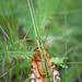 Hidden in the grass by haskar