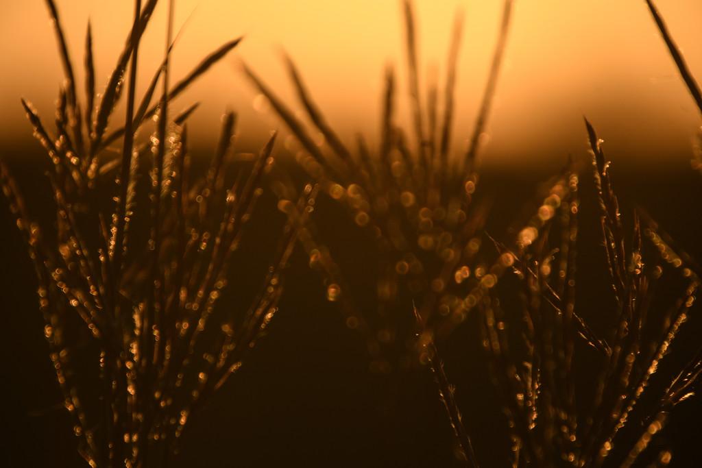 Nature's Glow Sticks by kareenking
